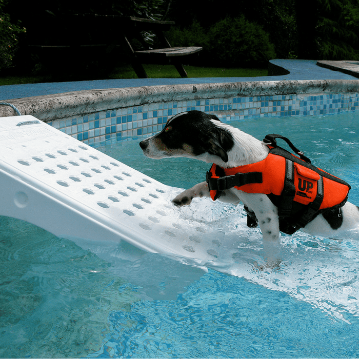 Use Swimming Pool Ramp for Dogs